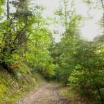 un chemin qui invite à se promener